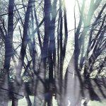 Waldgrenze 2