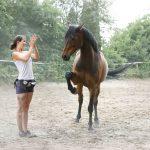 Pferdeflüsterin: Vertrauen ist das Fundament einer Pferdepartnerschaft