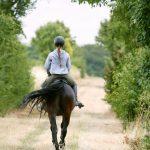 Komm, sattel jetzt Dein Pferd …