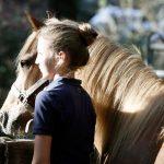 Am Beginn eines langen Pferdetages