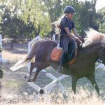 Reitunterricht – Training im Parcours