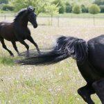 Pferdefreude