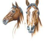 Zeichnung von Pferdeporträts