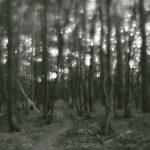 Sternenwald
